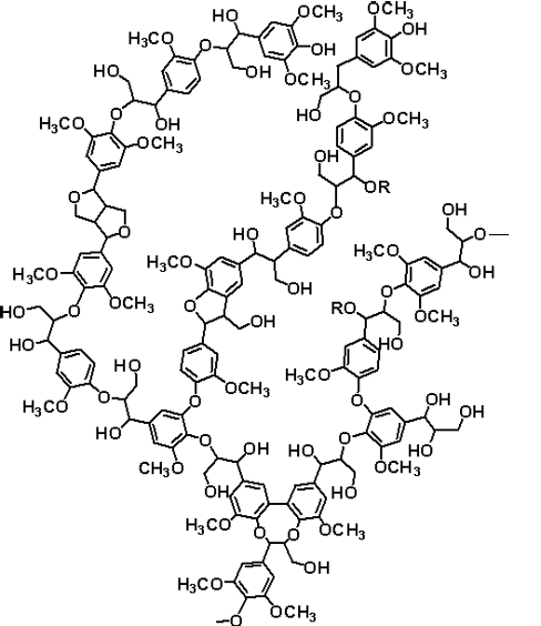 Part of a typical lignin structure